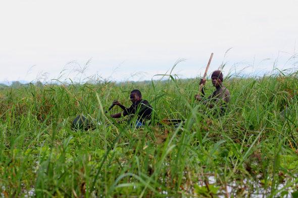 Liwonde: ハイエナとカヌーサファリの笑い