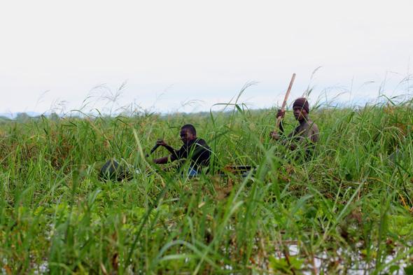 Liwonde: la risa de las hienas y el safari en canoa