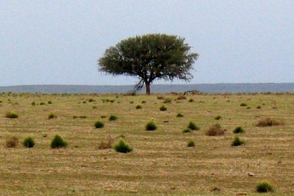 Gualichu: a la recerca de l'arbre sagrat de les ofrenes