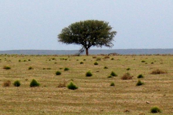Gualichu: en busca del árbol sagrado de las ofrendas