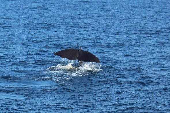 Andenes: looking for whales in the Arctic