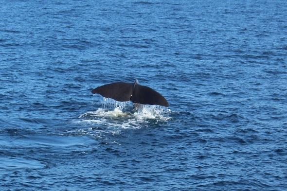 Andenes: buscando ballenas en el Ártico