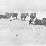 Campamento ponies Barrera