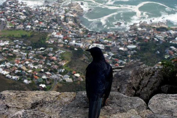 """Die Sicherheit von Kapstadt: """"Blank Pistolen?"""