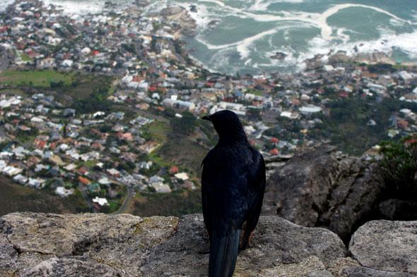 La seguridad de Ciudad del Cabo: ¿pistolas de fogueo?