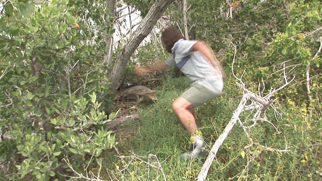 El ataque de un cocodrilo cabreado
