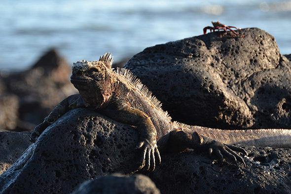 Ein Wunder namens Galapagos I.