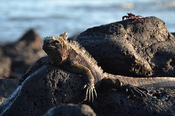 Un milagro llamado Galápagos I