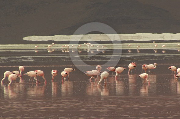 Paisaxes exóticas no sur de Bolivia