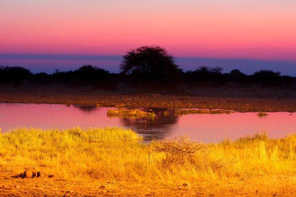 Etosha: panorámica da vida salvaxe