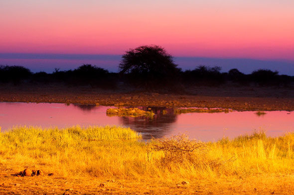 Etosha: la vida salvaje en pantalla panorámica