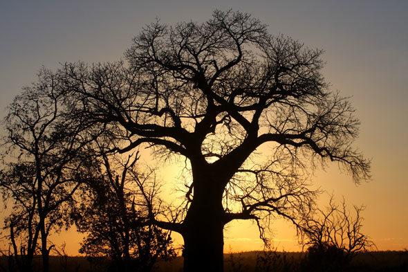 Gonarezhou: o xardín do baobá