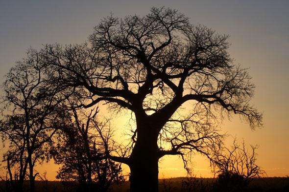 Gonarezhou: el jardín de los baobabs