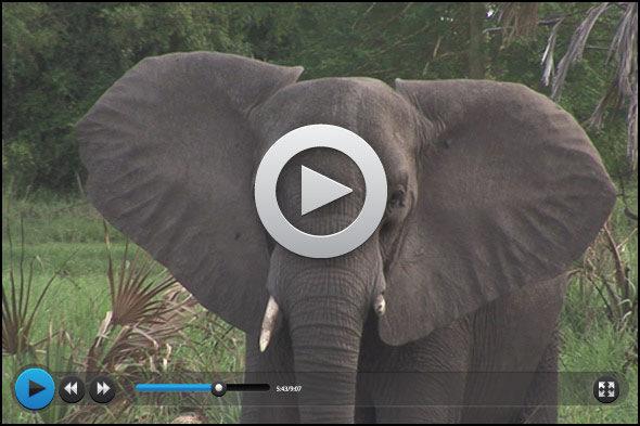 Gorongosa: Gedächtnis von Elefanten