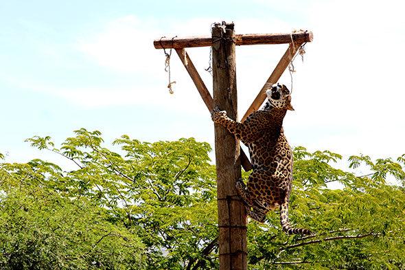 La leyenda del jaguar de la luz