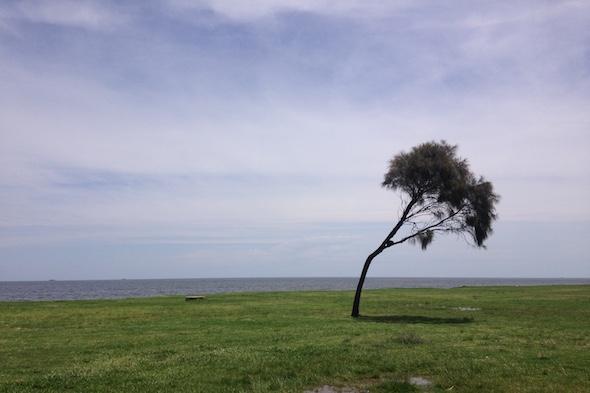 Verano en Montevideo: campo de ciudad