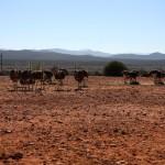Little Karoo, Sudáfrica