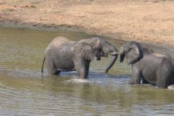 Kruger Sudafrica (9)