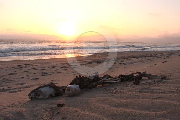Costa de los Esqueletos: el desierto contra el mar