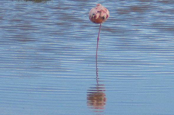 ナクル湖: それはロバート・レッドフォードのせいです