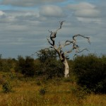 Paisaje de Kruger