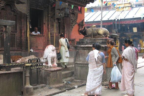 Patan: la penitencia de las cabras desdichadas
