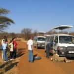 Pinchazo en el Serengeti Tanzania