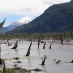 Río desviado por cenizas ahoga el bosque patagónico