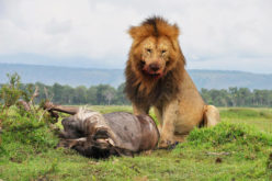 Safaris Kenia (3)
