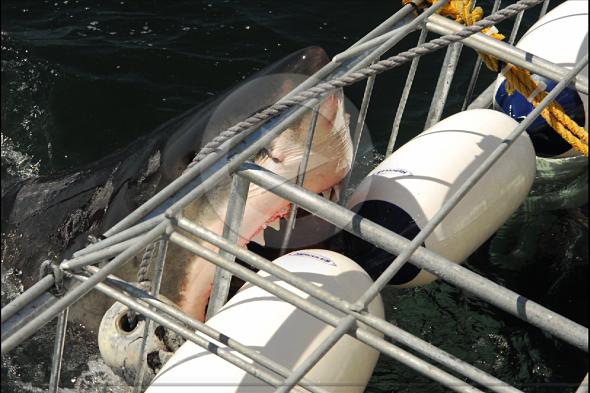 El Gran Tiburón Blanco: pánico en el sur de África