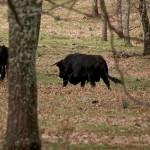 Tierra de toros bravos copia_opt
