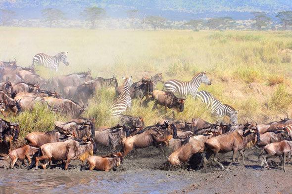 Gran migració: el major espectacle de la natura