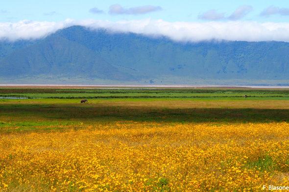 La Locura Ngorongoro