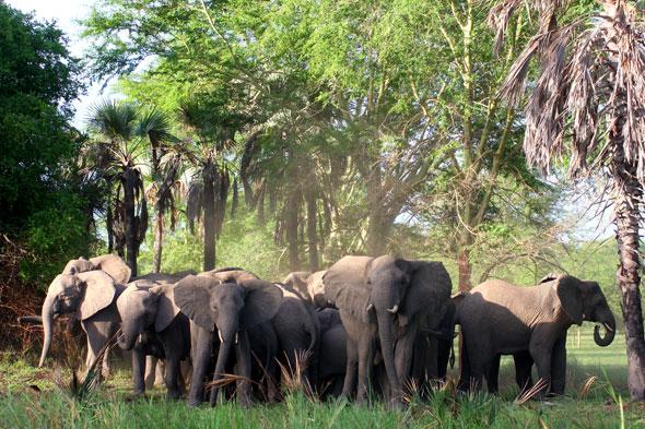 Gorongosa: la carga de los elefantes