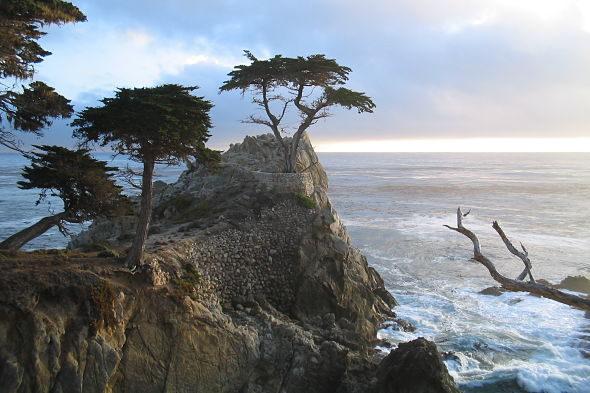 17 Mile Drive: a árvore mais fotografada do mundo