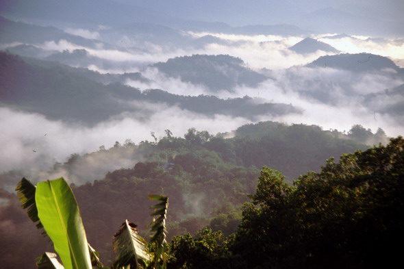 O último lugar na terra: Borneo Selva