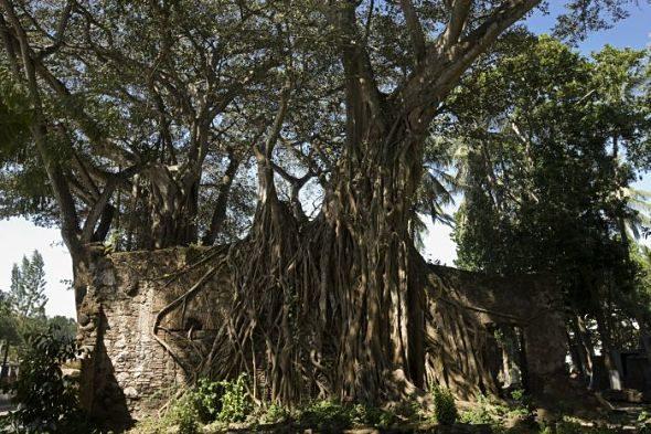 Villa Rica: el comienzo de la epopeya de Hernán Cortés