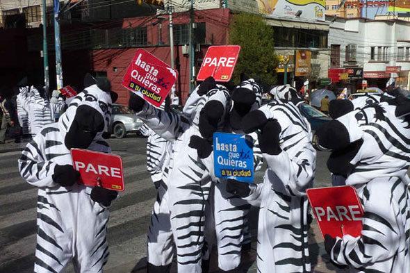 Die verrückte Geschichte der Zebras La Paz