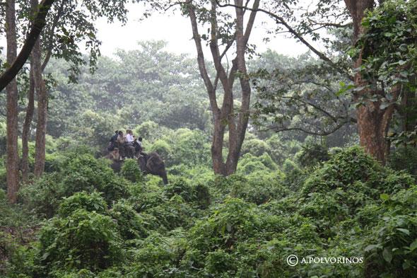 """Chitwan: el parque en el que se inspiró """"El Libro de la Selva"""""""