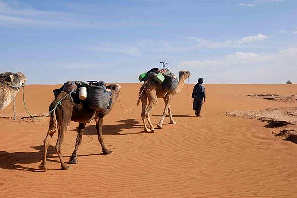 Ruta en camello a las Puertas del Sáhara