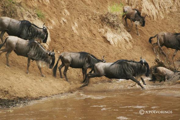 La gran migración africana y los Joubert