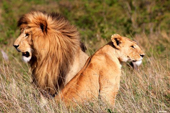 Safari fotográfico por el Masai Mara