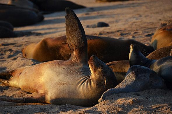 Un milagre chamado Galapagos II