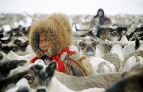 Nenets herders, the last nomads of Siberia