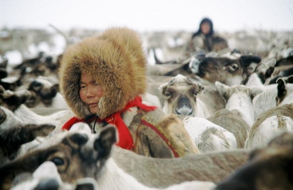 Pastores Nenets, los últimos nómadas de Siberia