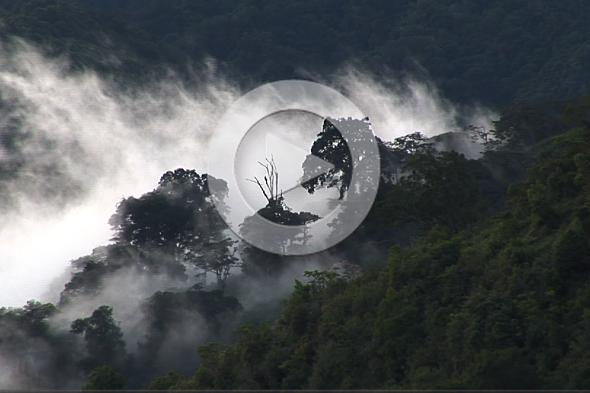 Los bosques del mítico quetzal