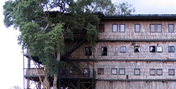 Aberdares: el hotel-árbol que coronó a una reina